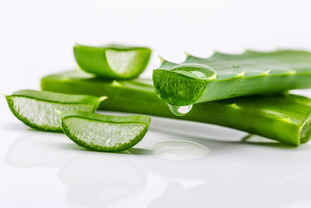 Cultivo de Aloe vera ecológico