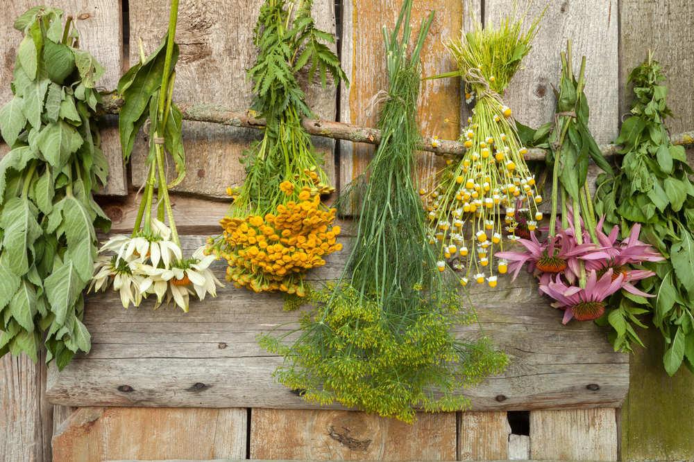 Plantas medicinales para el estrés