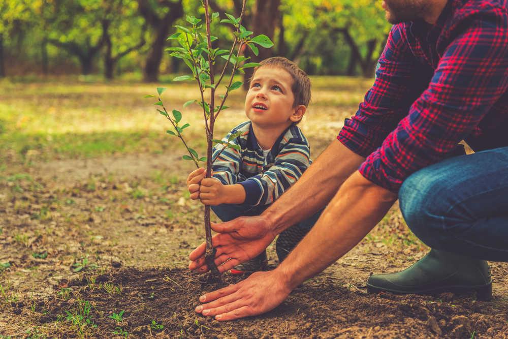 Promover la salud de nuestro cuerpo a través de las plantas